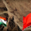 [2021.08.03] India & China agree to a troop pullback from Ladakh